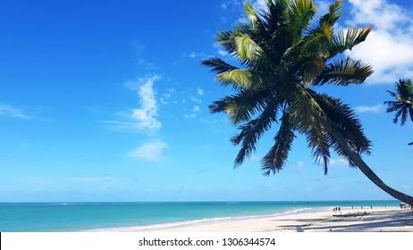 coconut paradise beach