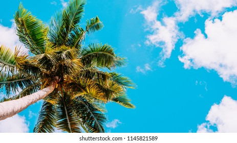 Coconut plam tree with blue sky background,Nature concept background,Summer concept.