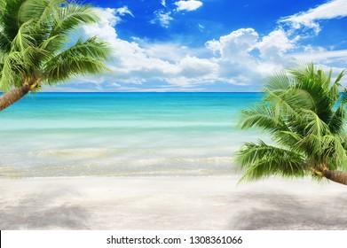 coconut plam trees on island and sandy beach summer concept