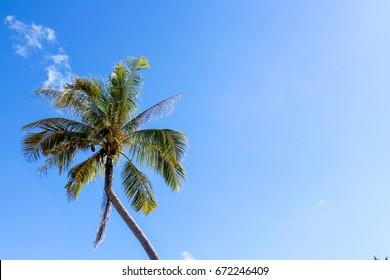 Coconut seaside