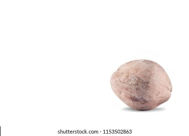 coconut seeding on white background planting agriculture isolated