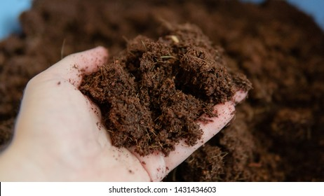 coconut soil for growing plants. The best soil for growing marijuana