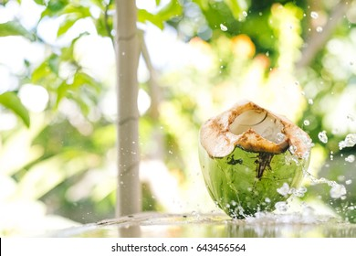A coconut splash in the a tropical forest