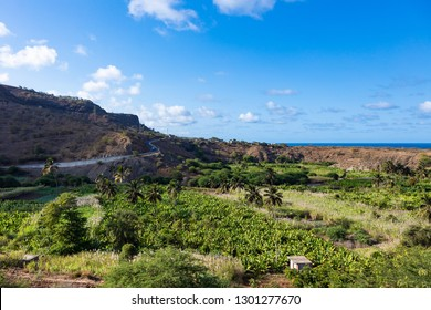 Coconut and sugar canne plantation near Calheta Sao Miguel in Santiago Island  in Cape Verde - Cabo Verde