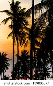 coconut at sunset