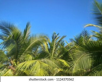 Coconut Top of the coconut Sea of Asia