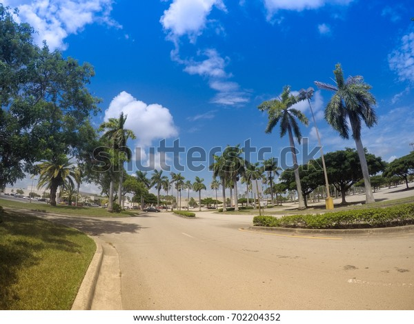 Coconut town