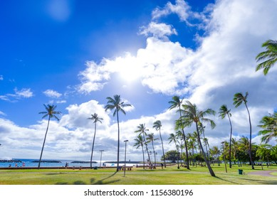 Coconut tree at Ala moana beach park, Hawaii