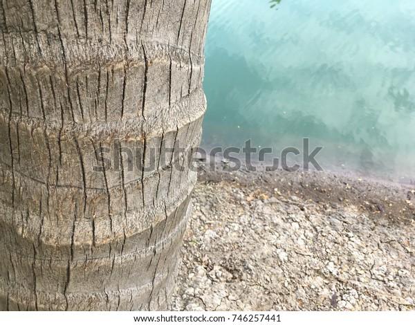 Coconut tree bark at riverbank