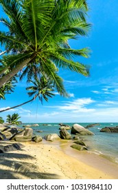 Coconut tree at coconut beach on Son island, Kien Giang, Vietnam. Near Phu Quoc island