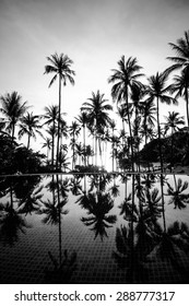 Coconut tree at the beach with shadow in swimming pool on sunset time with black and white color