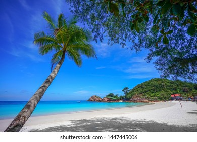 Coconut tree and beautiful blue beach at Redang Island, Malaysia