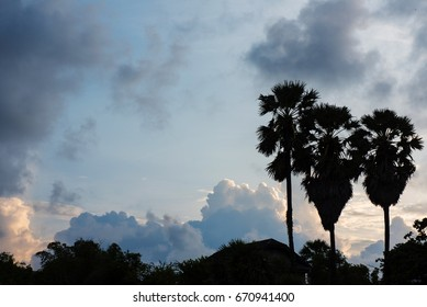 Coconut tree and beautiful clouds