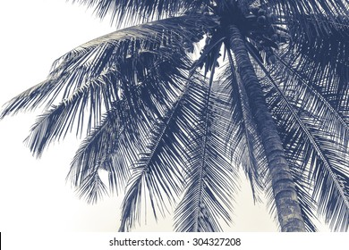 coconut tree in black and white like painting