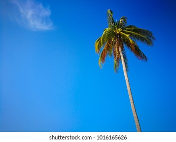 The coconut tree and blue sky