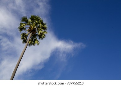 Coconut tree with blue sky background Nature style