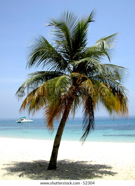 a coconut tree with a boat in the background