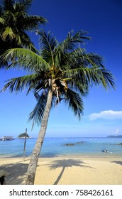 Coconut tree by the sea with clear blue sky