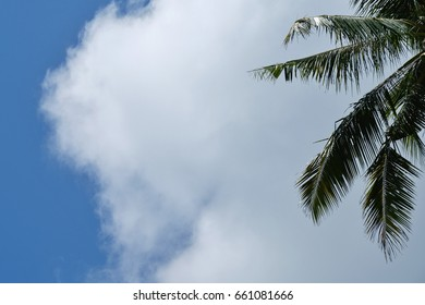 Coconut tree with colorful blue sky and cloud background