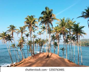 Coconut tree hill in Mirissa, Sri Lanka - a beautiful scenic location