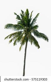 Coconut tree isolate in Koh Lipe,thailand