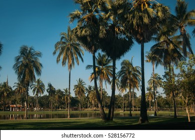 Coconut tree and lake at Thailand with vintage style