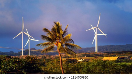 A Coconut tree in the middle of windmill turbines or windmill power generation in Haleiwa town on countryside, Oahu island, Hawaii USA