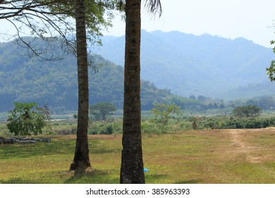 coconut tree and mountain