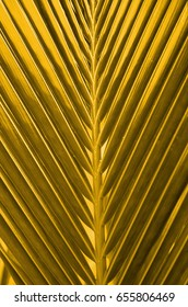 The coconut tree often referred as the tree with a thousand use in southeast asia  / Coconut Leaf / Coconut fronds up close with details of the stiff mid-ribs and leaves in various colors background