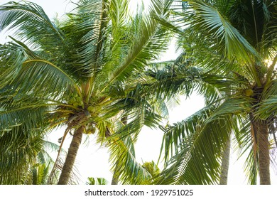 coconut tree on the beach nature background