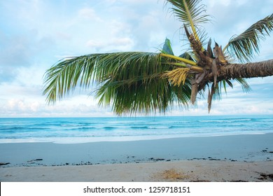 Coconut tree on beach at the sky.