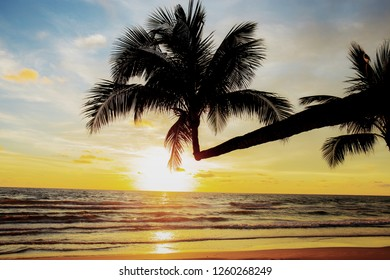Coconut tree on beach with the sunset at sky.
