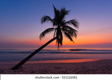 Coconut tree on the sandy beach,Palm.