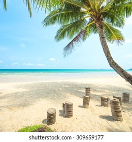 Coconut tree palm and tropical beach at Koh chang island in thailand