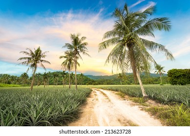 Coconut tree and pineapple in agriculture landscape