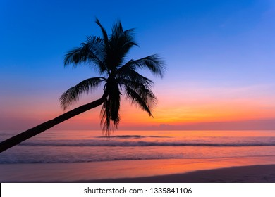 Coconut tree silhouette on the sandy beach,Palm.
