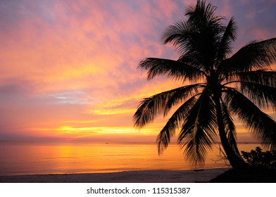 A coconut tree silhouette on sunrise at the beach in the southern of Thailand