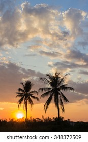 The coconut tree silhouette on sunset