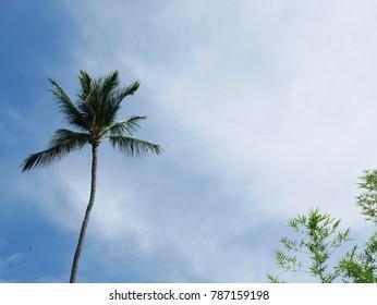 coconut tree with sky