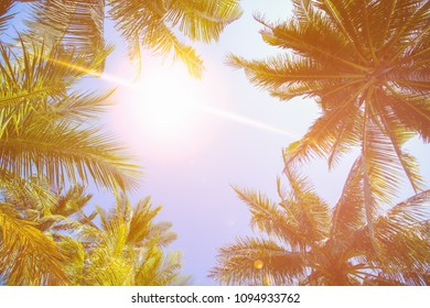 Coconut tree and sky background in warm tone.