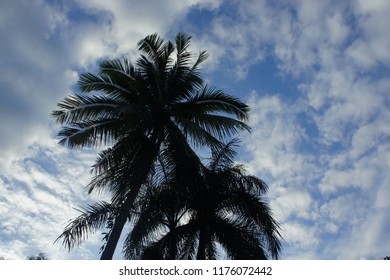 Coconut tree and sky with cloud before rains