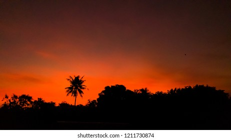 Coconut tree at sunrise