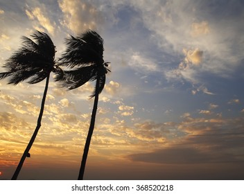Coconut tree in the sunset sky, Thailand