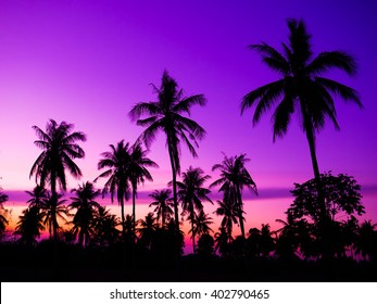 coconut tree in thailand beautiful  sunset background.,made with Vintage Tones,Warm tones , with Effects filters.