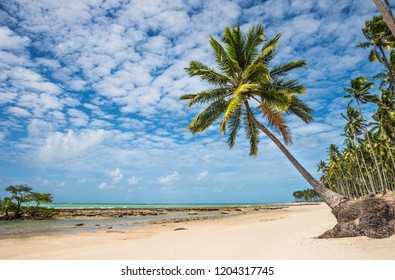 Coconut tree in a tropical beach with white sand and and beautiful sky