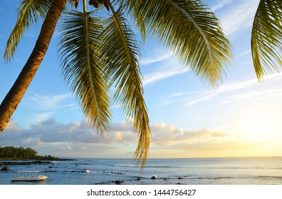 Coconut tree at tropical coast of Mauritius island at sunset. Indian ocean.