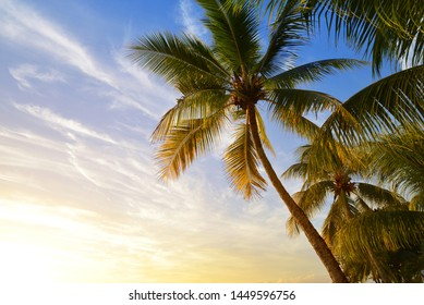Coconut tree at tropical coast of Mauritius island at sunset.
