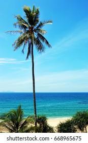 Coconut Tree Under Blue Sky