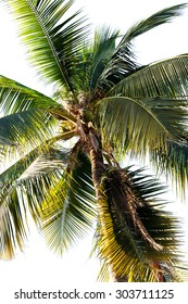 Coconut tree in  worm's eye view.fruit on top of coconut stem.