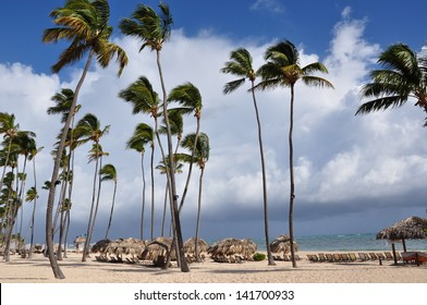Coconut trees in the beach